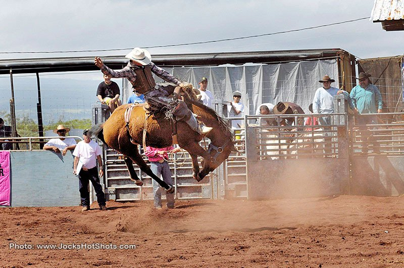 Gallery Panaewa Rodeo Stampede